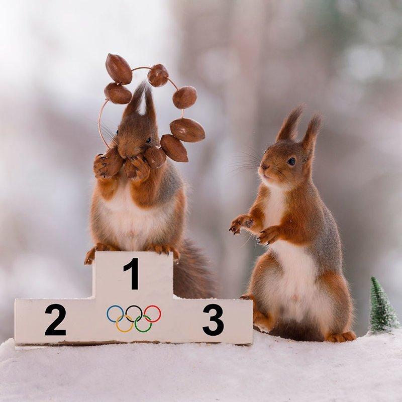Зимние Олимпийские игры для белок
