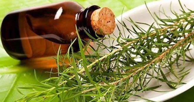 Масло чайного дерева от прыщей – лучшее для проблемной кожи