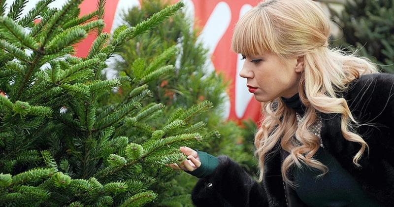 Как использовать осыпавшуюся хвою с елки после праздников