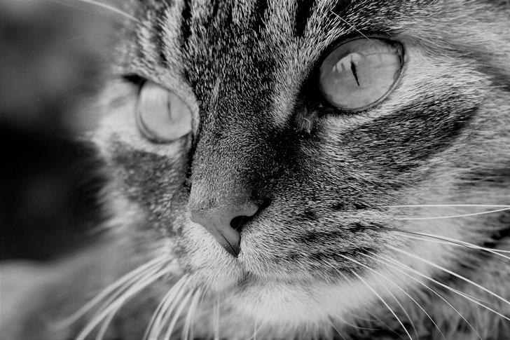 Потерянный кот вернулся к на…