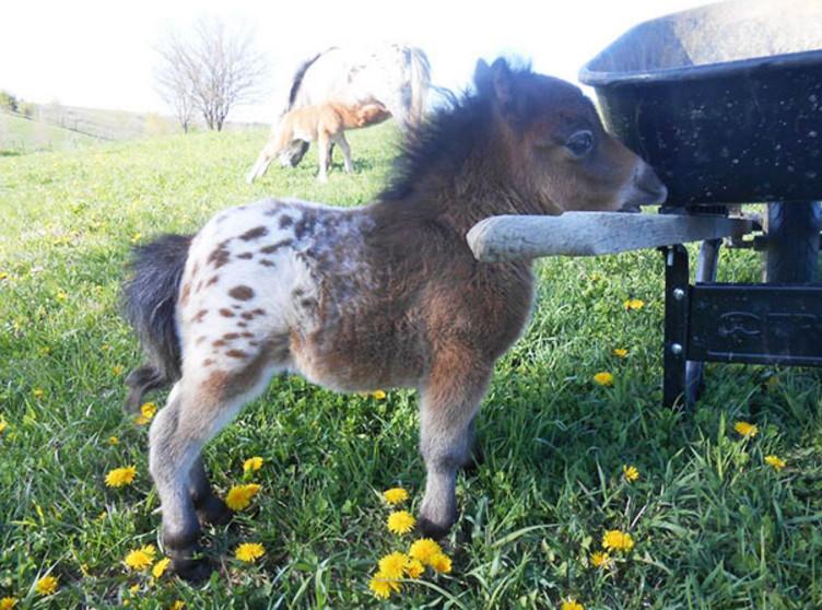 Это лошадки или игрушки?