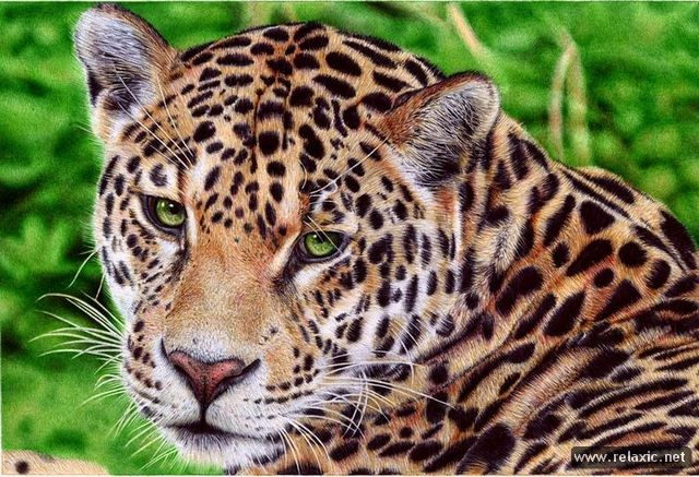 Невероятные рисунки Сэмюэля Сильвы (8 фото)