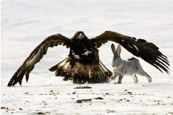 Соколиная охота (13 фото) в Фотоприколы на Развлекательный блог OTVALI.RU