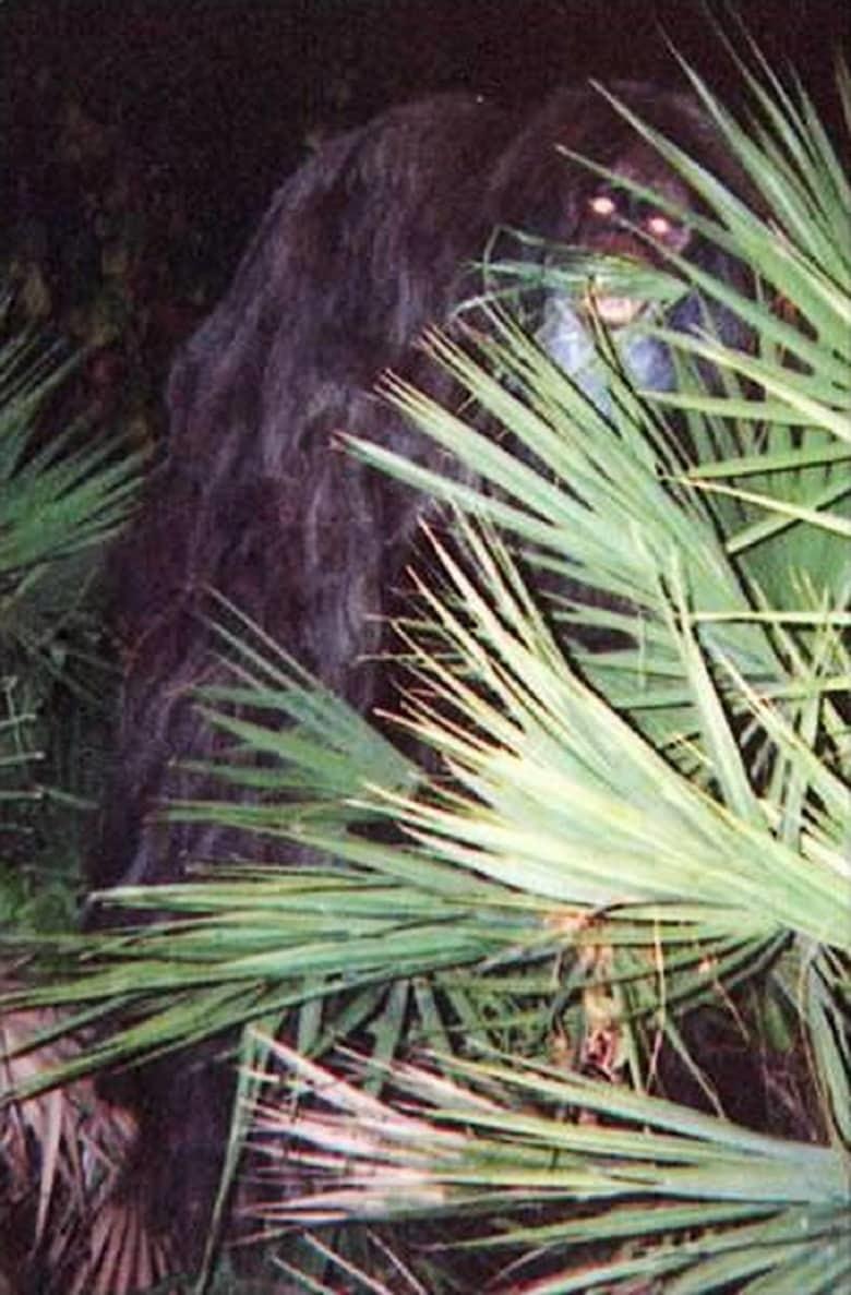 13. Скунсовая обезьяна загадка, мистика, явление