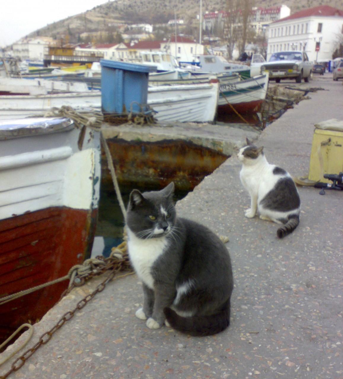 Хозяин района балаклава, интересное, коты, юмор