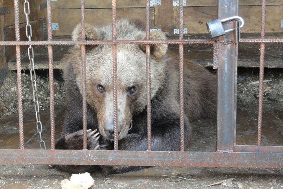 Двух измученных медведей спасли из частного зоопарка в Сергаче