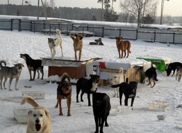 Как дать отпор стае собак