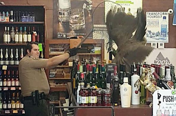 Павлин устроил дебош в алкогольном магазине