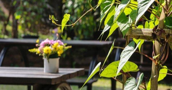 10 садовых идей для ленивого дизайнера