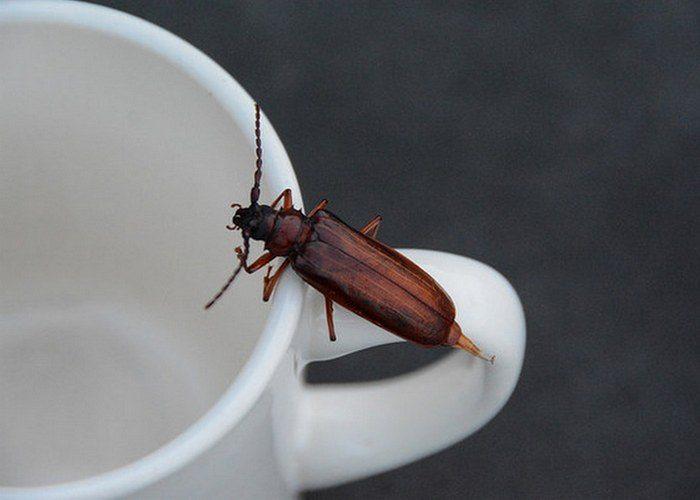 Кофейная гуща: полезна не только для гаданий!