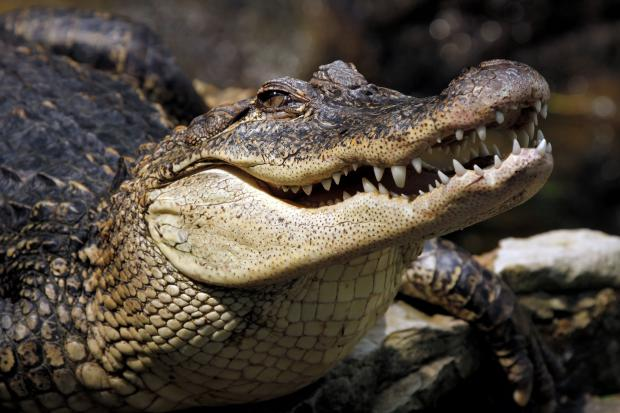 Австралийские крокодилы подкараулили неудачливых рыбаков