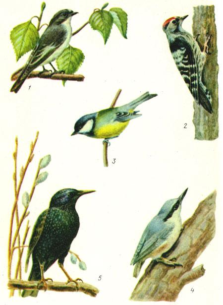 Какие птицы полезны в саду