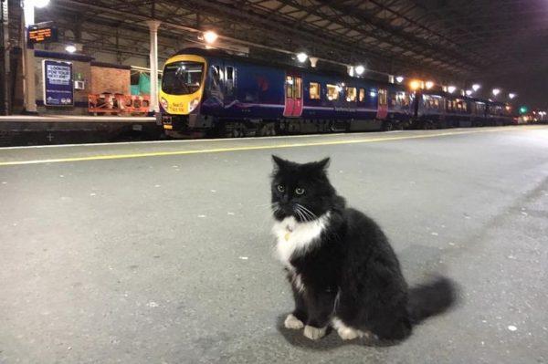 Привокзальная кошка помогла продать тройной тираж британской газеты