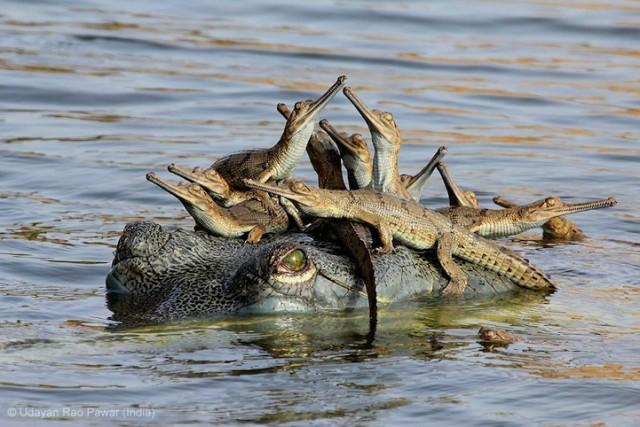 Забавные фото победителей конкурса Wildlife Photographer of the Year (4)