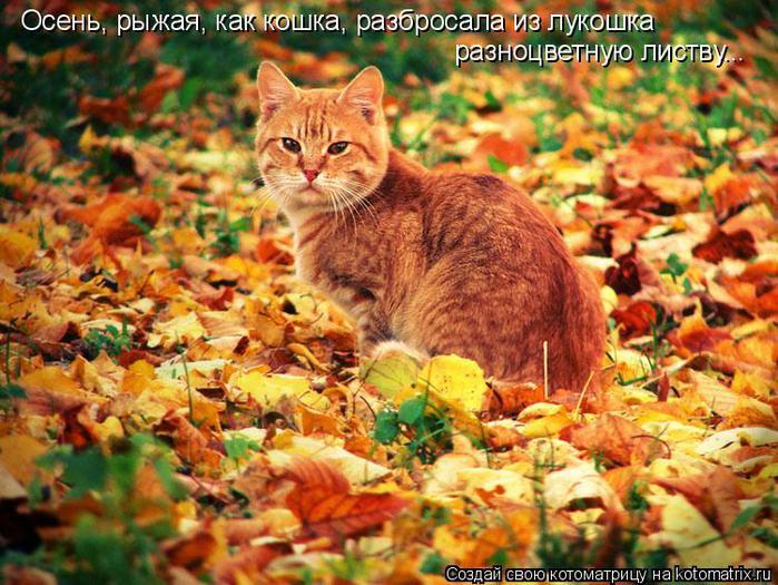 осень рыжая кошка (700x525, 85Kb)