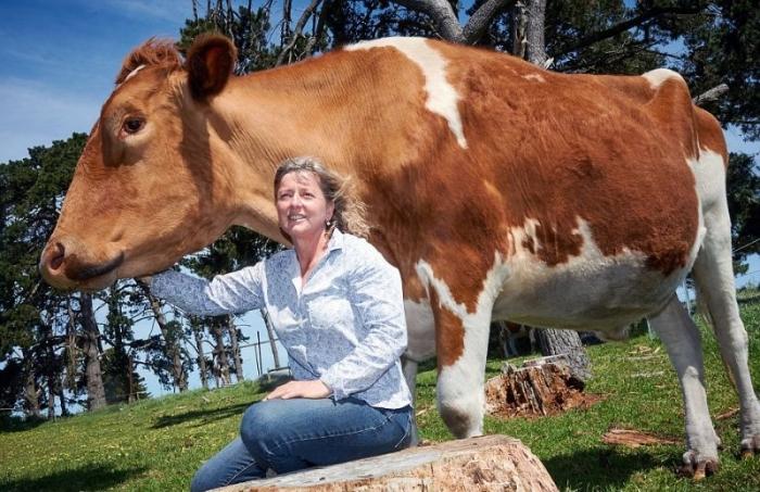 Самая большая корова в высот…