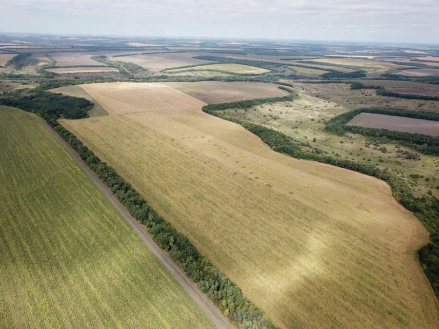 Украинская аэроразведка засняла гигантские поля каннабиса в Днепропетровской области