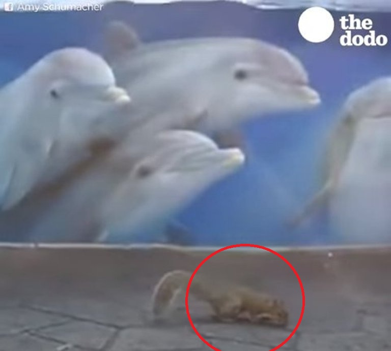 Узники-дельфины следят за белками, бегающими на свободе