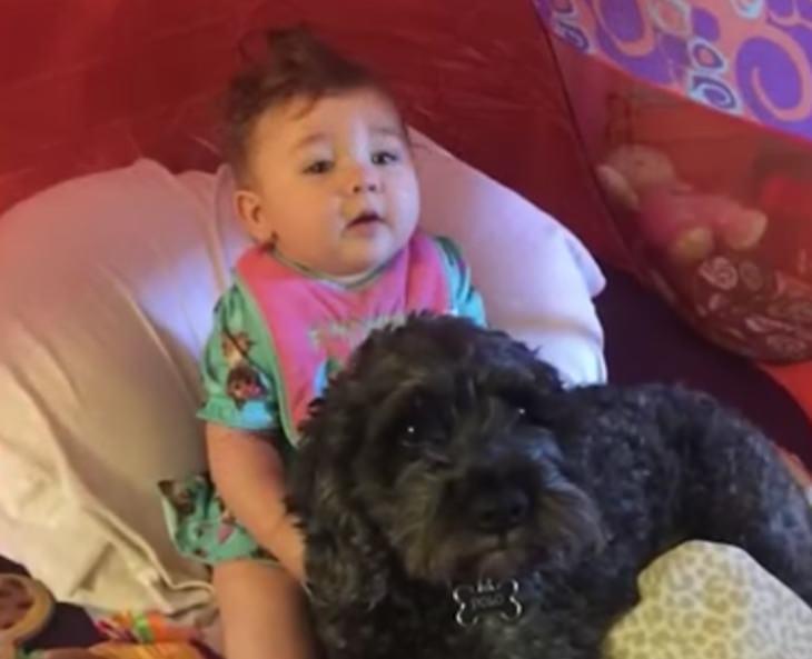 Девочка погибала в горящем доме, но пес спас малышку, пожертвовав своей жизнью