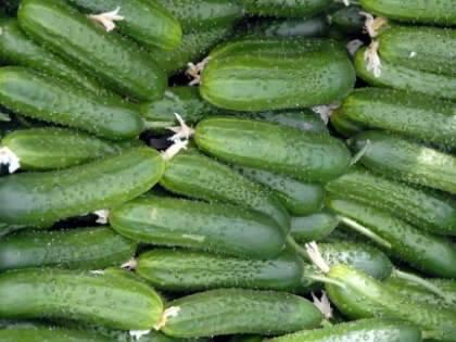 Правда ли, что огурцы нужно сажать старыми семенами?