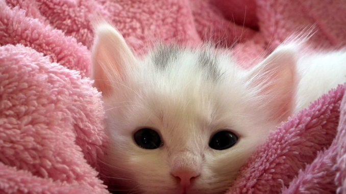 6 научно доказанных фактов о пользе домашних животных