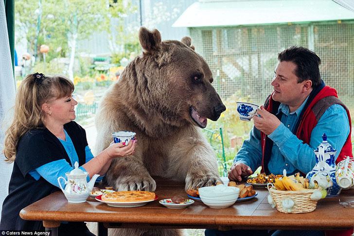 В русской семье живёт медведь. Без шуток - медведь!