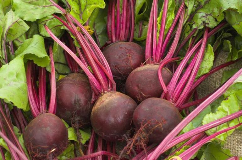 Как получить небывалый урожай крупной и сладкой свеклы