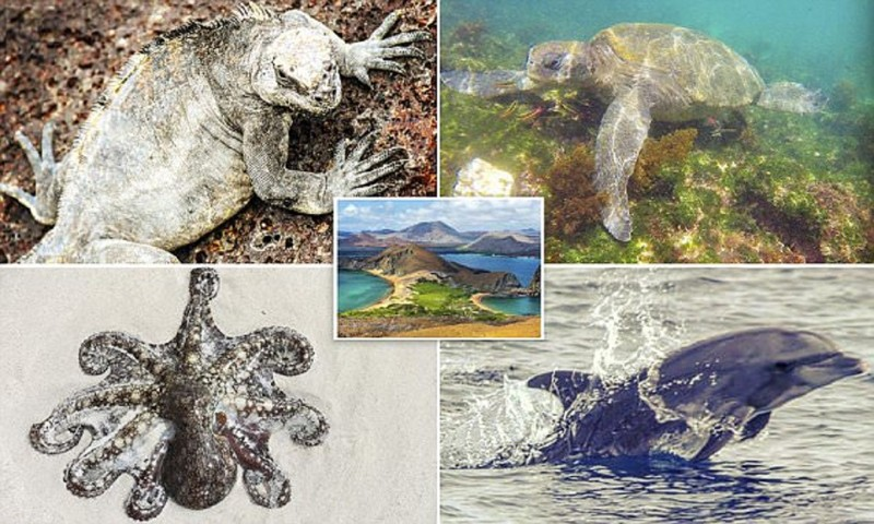 Галапагосские острова - настоящий рай на Земле