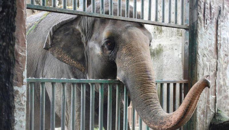 Активисты просят освободить печального слона