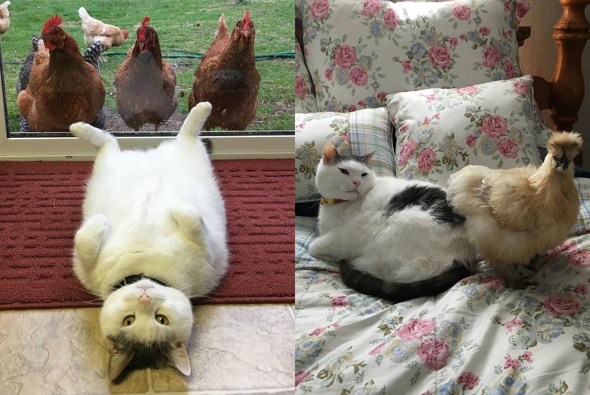 Instagram толстого кота, по которому цыпочки сходят с ума