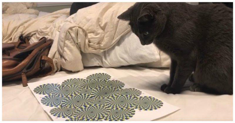 Реакция кота на оптическую иллюзию