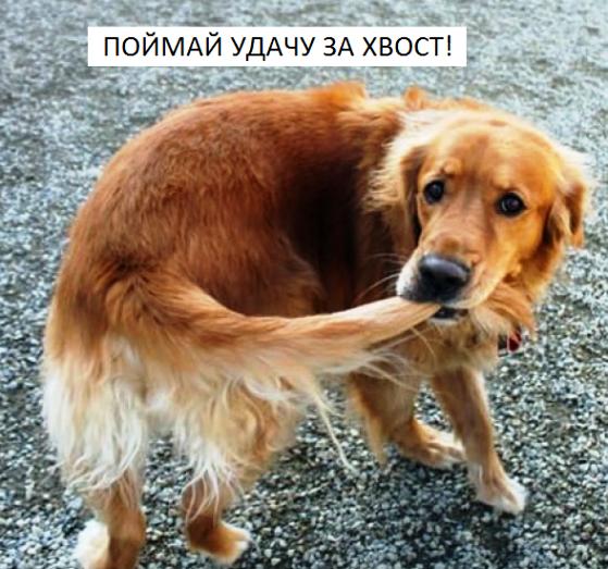 Наши добрые пожелания с очаровательными собаками для  новогоднего настроения!