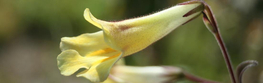 Реанимация растений