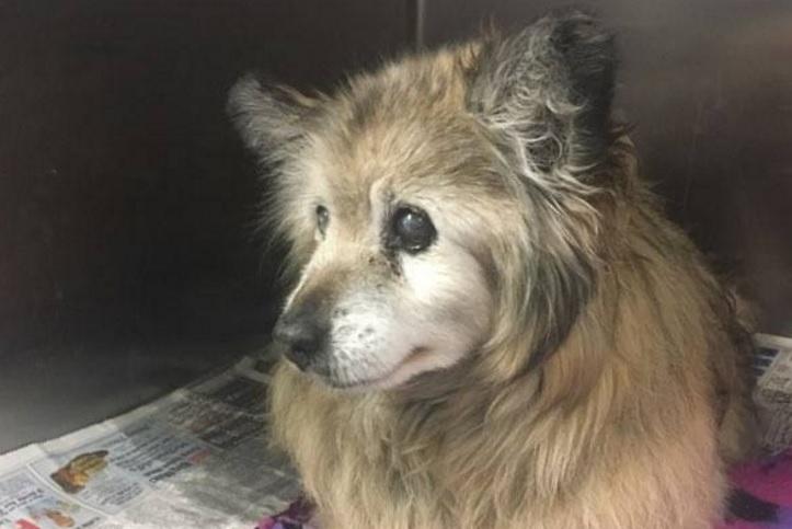 Бывший владелец хотел усыпить эту собаку, но ее спасли.