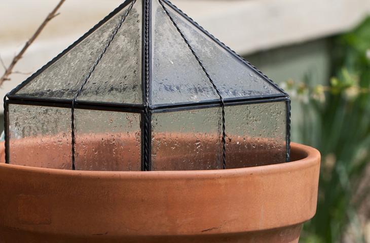 Как посадить и вырастить имбирь дома