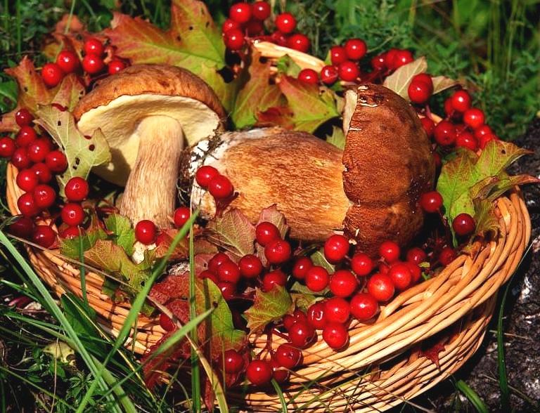 Правительство планирует ввести налог на сбор ягод, грибов и орехов