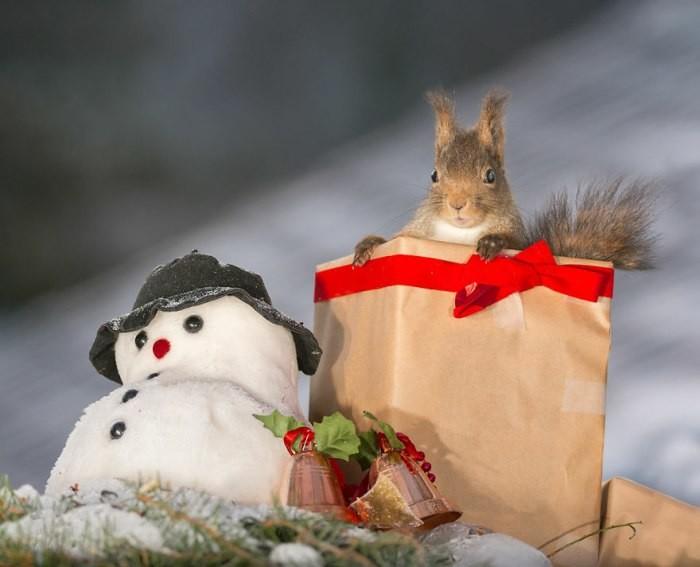 В предвкушении волшебства: рождественские белки на снимках Гирта Веггена