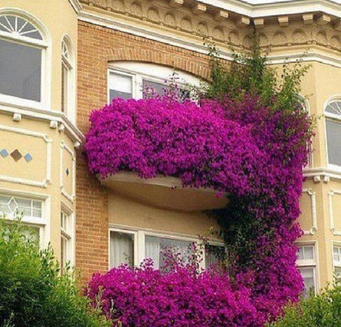 Дизайн лоджии с цветами..