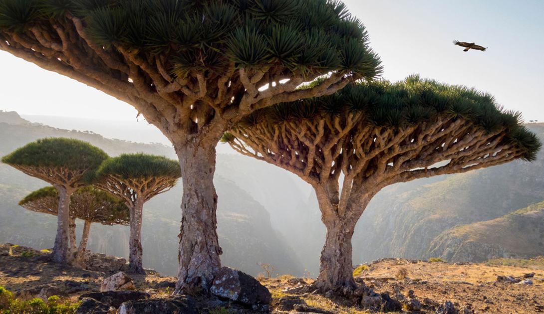 Самые впечатляющие памятники природы из списка ЮНЕСКО