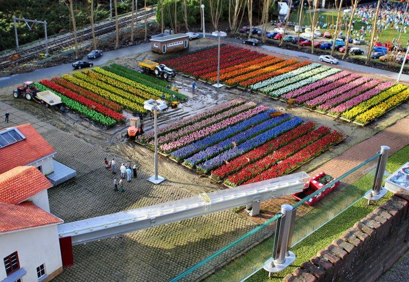 Цветочные поля Голландии в парке Мадюродам. Фото