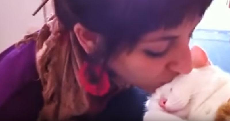 Девушка поцеловала спящую кошку. Мурлыка отреагировала особенным образом!