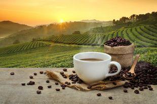 Пить или не пить? 5 самых распространенных мифов о кофе