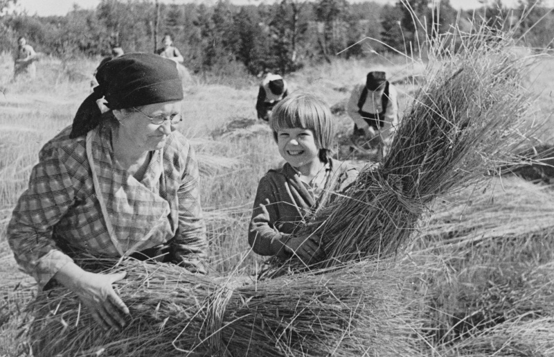 Советские колхозники — шестидесятилетняя женщина и ее внучка — убирают урожай в сентябре 1941 года. Источник: Библиотека конгресса США.