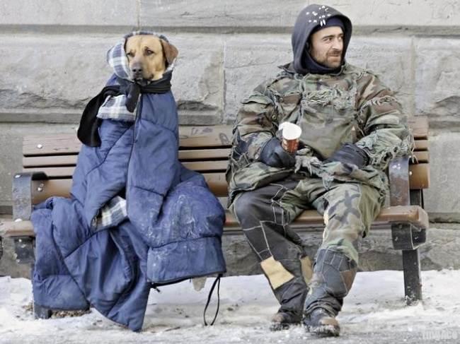 10 историй о том, что преданней собаки нет никого
