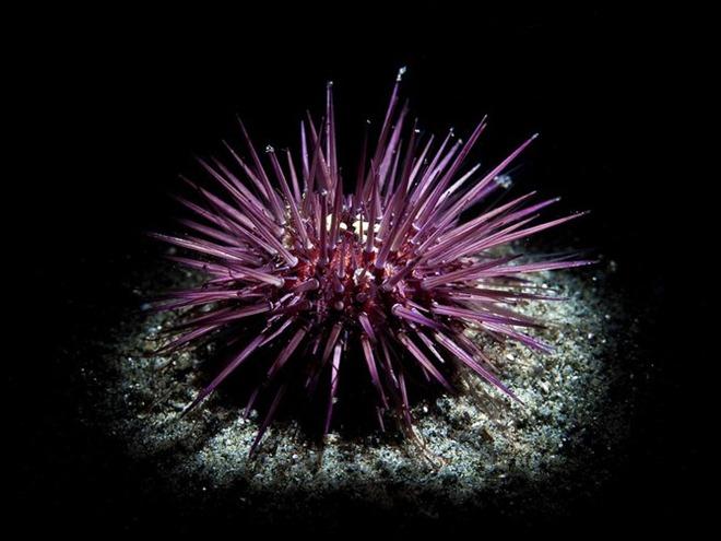 Красота подводного мира от Николаса Самараса (Nicholas Samaras)