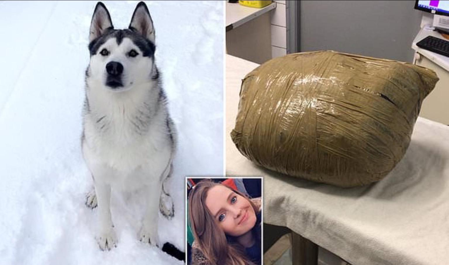 Жуткий сюрприз: девушка вернулась и обнаружила любимую собаку мертвой и обмотанной скотчем
