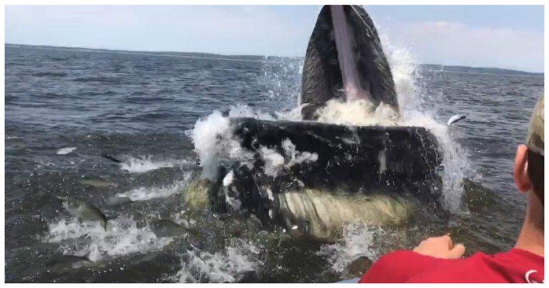 Огромный горбатый кит вынырнул в метре от лодки с рыбаками