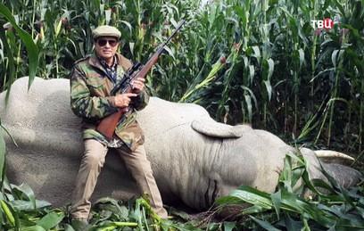 В Индии убили нападавшего на людей слона