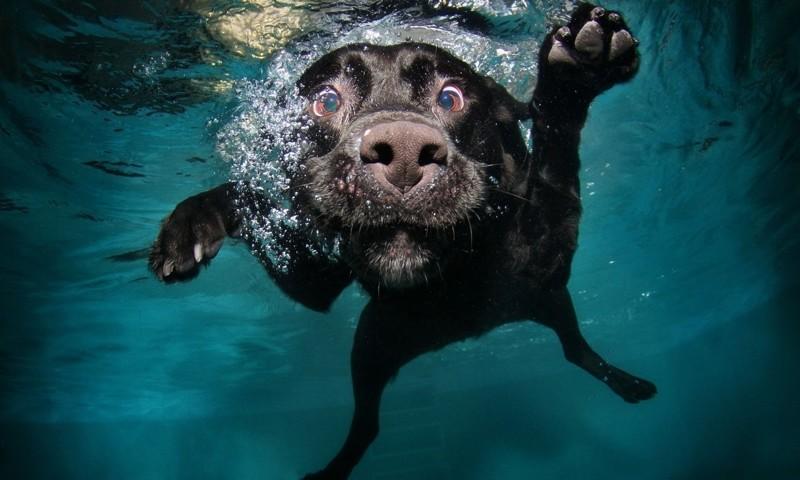 В России собак научили дышать жидкостью