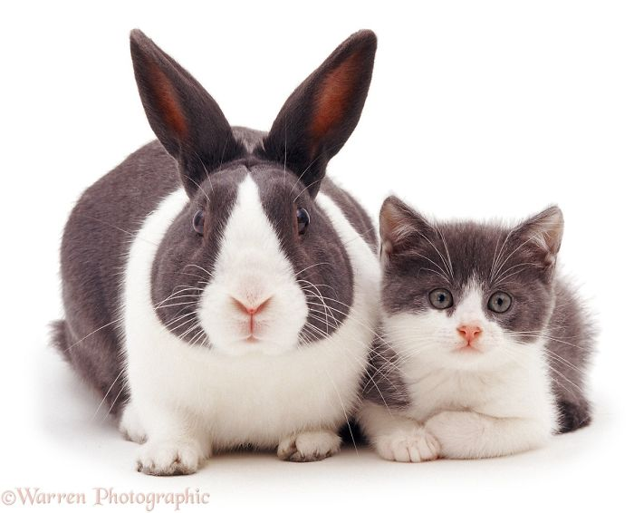 Adorable Pet Brothers From Other Mothers By Warren Photographic
